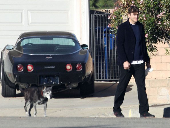 Ashton Kutcher takes his dog for a stroll
