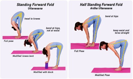 Forward Bends