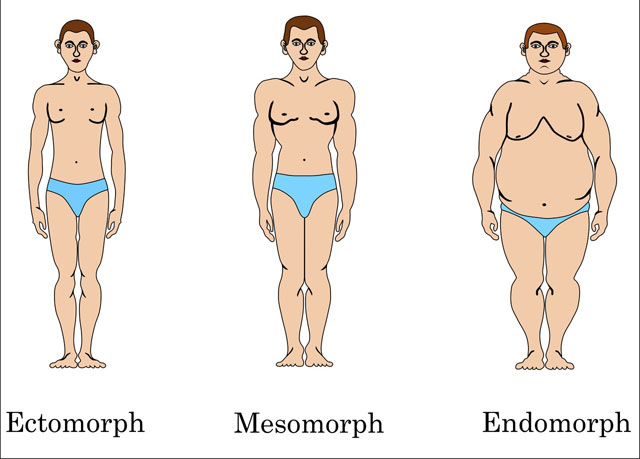 If You Are Ectomorph, Then This Program Is For You ...