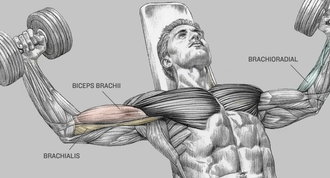 10 Tips To Build Bigger And Better Biceps Healthy Celeb