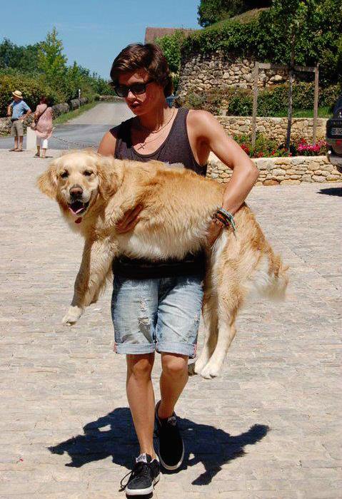 Bradley Simpson with his dog Jesse