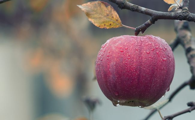 Non-Citrus Fruits
