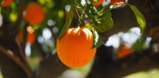 Best Citrus Fruits for Weight Loss