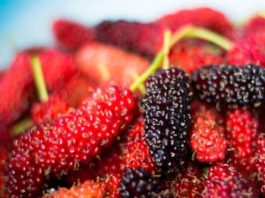 Benefits of Eating Mulberry
