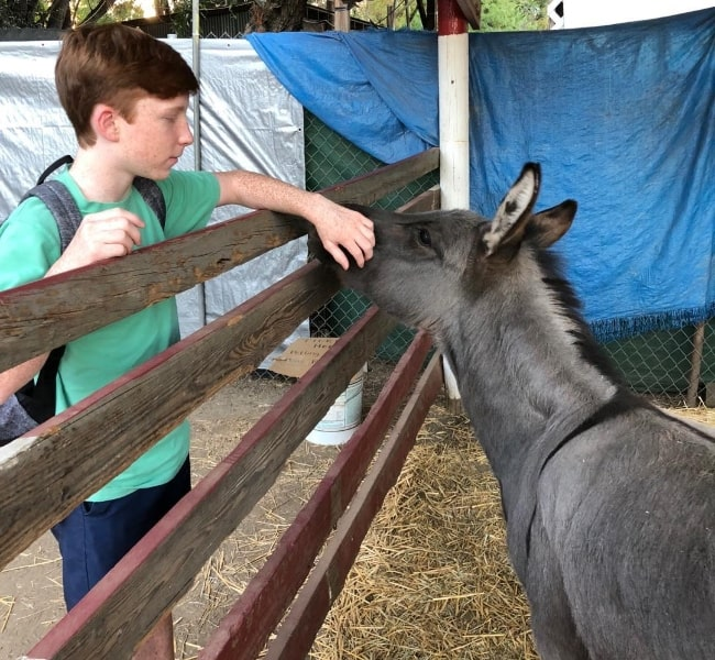 Carter Hastings as seen while petting a donkey in October 2018