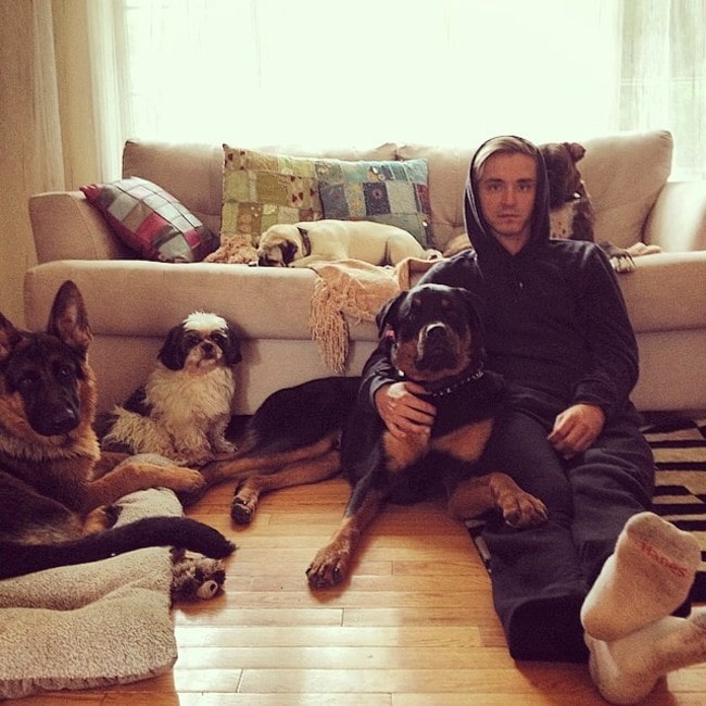Mark Spicoluk with his dogs as seen in September 2014