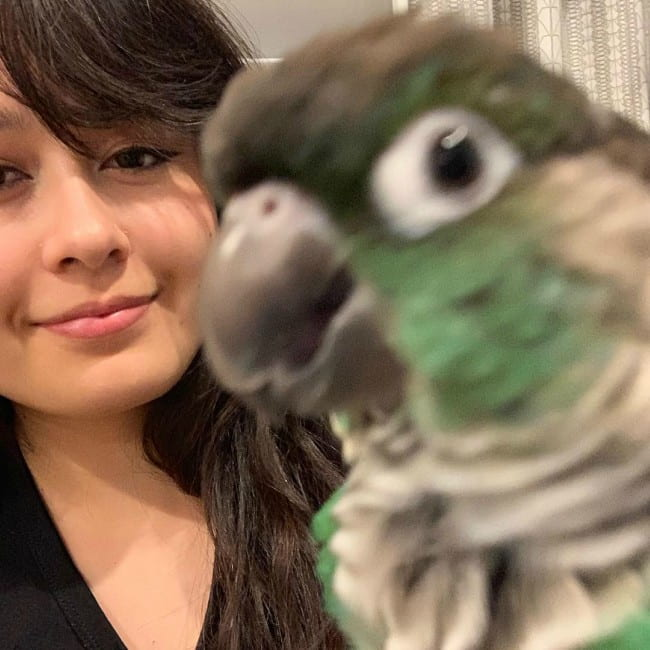 Jaiden Animations with her parrot as seen in December 2018
