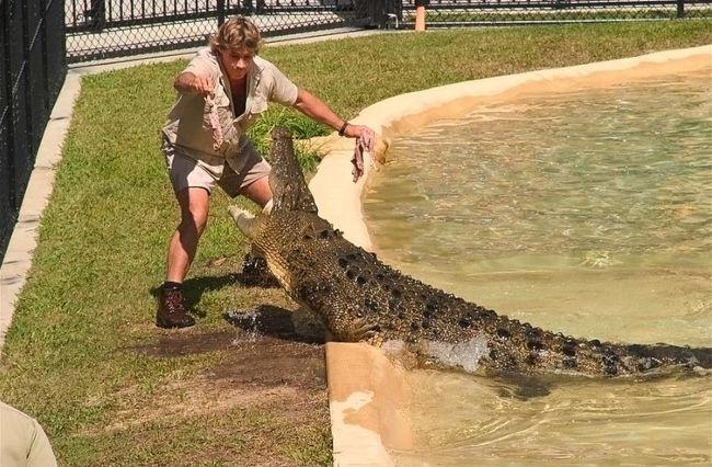 Steve Irwin as seen feeding a crocodile in 2004
